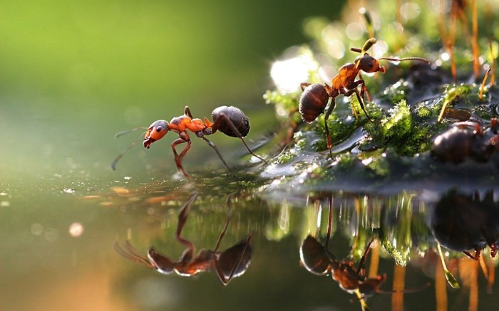 Seeing the Light: Army Ants Evolve to Regain Sight and More In Return to Surface
