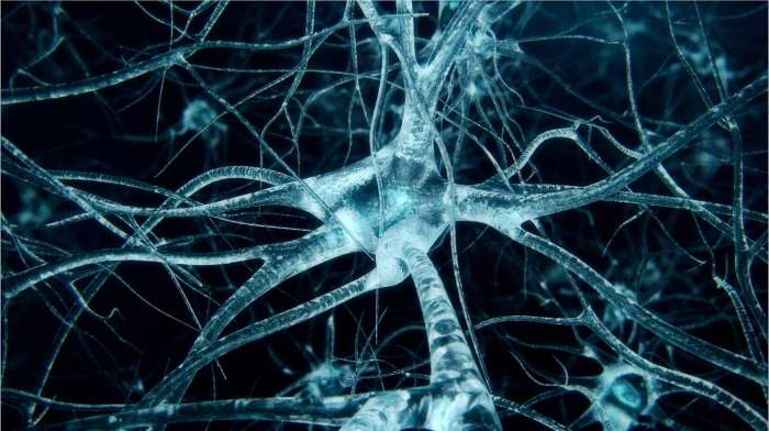 Tamping Down Neurons' Energy Use Could Treat Neurodegeneration