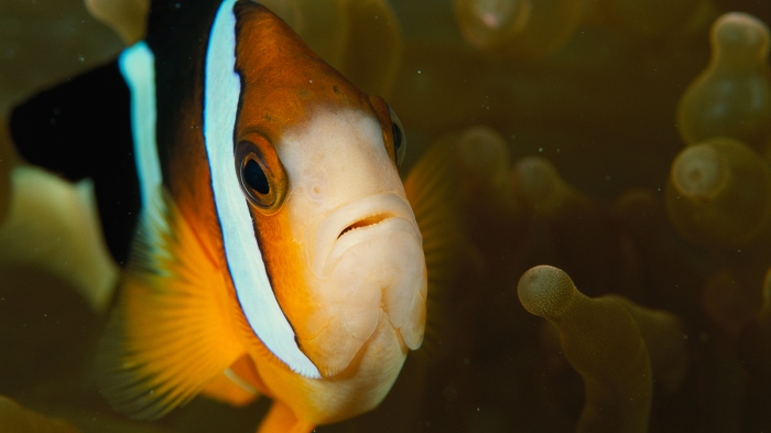 Fish Can Recognize Human Faces, New Study Shows