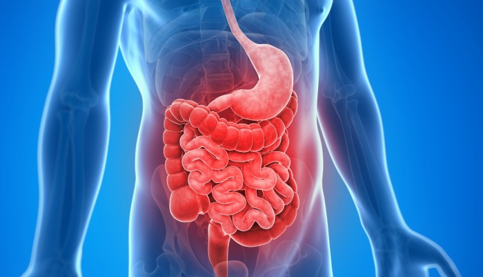Fungus In Humans Identified For First Time As Key Factor In Crohn's Disease
